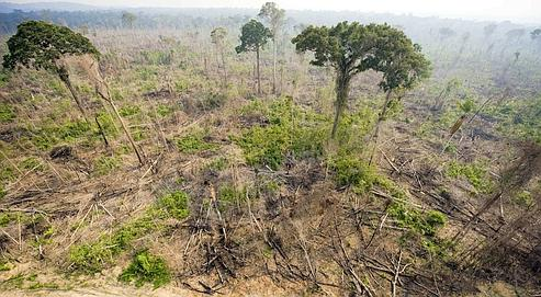 """Aerial view of a burnt out sector of the Jamanxim National Forest at an illegal settlement November 29, 2009, in the Amazon state of Para, nothern Brazil. A Danish draft proposal for a political agreement """"threatens the success"""" of UN climate talks in Copenhagen, the head of the G77 group of developing countries said Tuesday. AFP PHOTO ANTONIO SCORZA"""