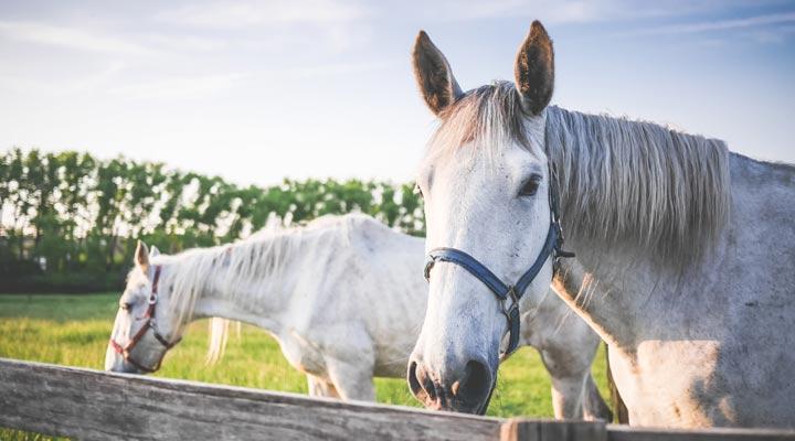 Compléments alimentaires pour chevaux de sport, est-ce nécessaire ?