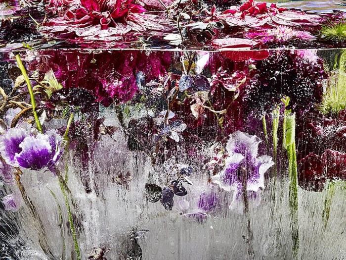frozen-flowers-locked-in-ether-kenji-shibata-4