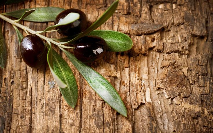 olives_leaf