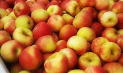 Apple Gift Pack – dozen