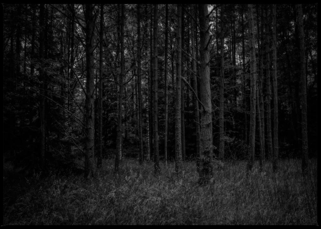 dark-forest-5