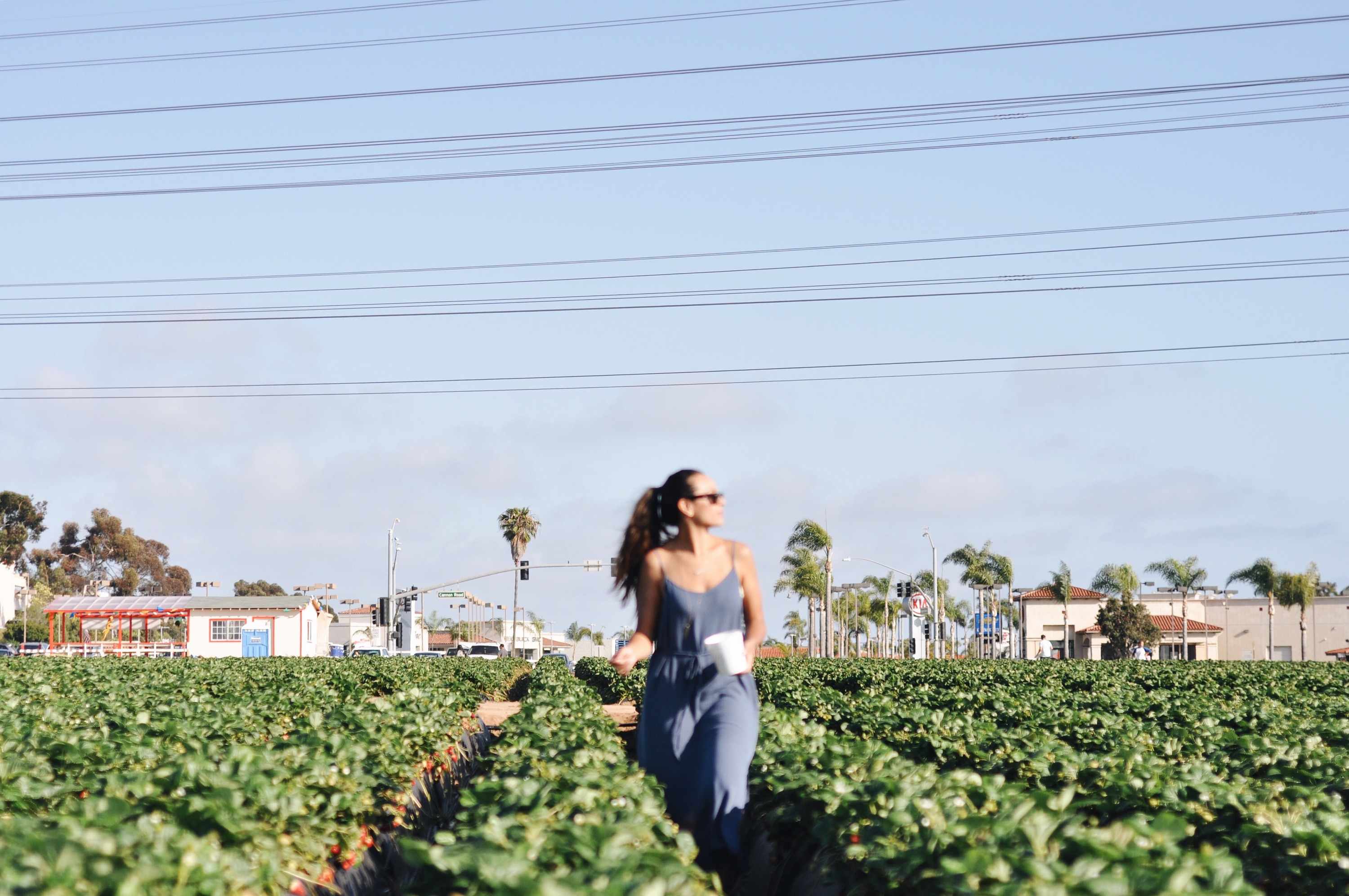Pick your own strawberries in carlsbad ca elanaloo we spent the next while picking strawberries getting lost in the open rows seeing who could find the best ones snacking on the juicy sweet fruit like fandeluxe Gallery