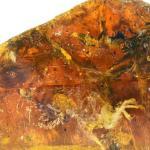 Insólito fósil de un 'pajarito' conservado en ámbar desde la época de los dinosaurios