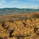 De copa en boca: Altos de Losada 2007 y 2008