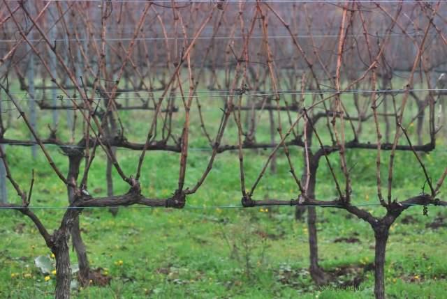 Fazenda Pradio. Viñas Reposo-invernal