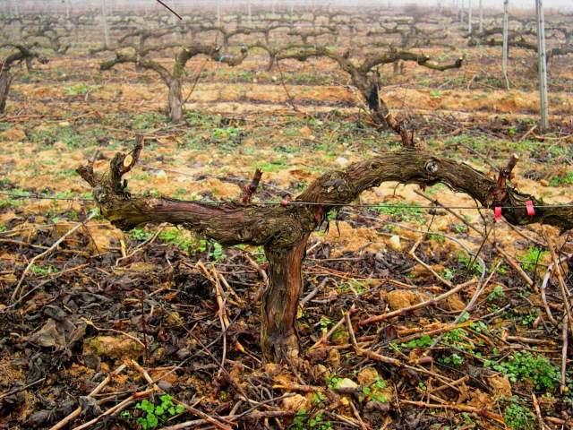 La viña de Valtravieso