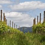 Vinhos Verdes. Vinos sí, verdes, no