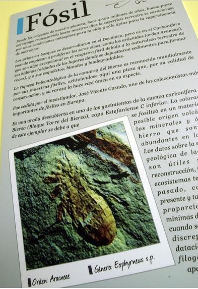 Carte explicativo sobre el fósil de una araña expuesto en la sede de la Asociación Mineralógica Aragonito Azul, en la Casa de las Gentes de Bembibre (León), y que es la imagen de un sello con motivo del X aniversario de la asociación