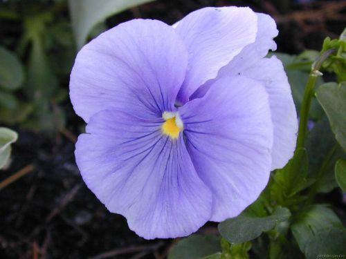 """flores02 - A todas nuestras amigas llamadas """"Ella"""""""