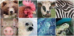 derechos animales - derechos-animales