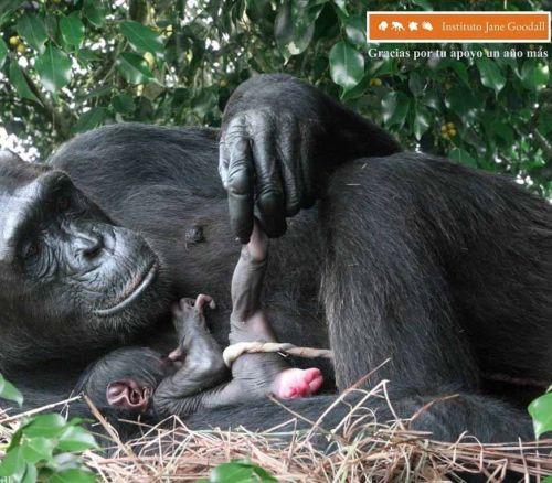 mono parto - Como la vida misma
