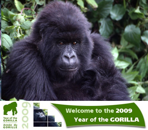 ano del gorila 2009 - Año del Gorila 2009. Uniendo esfuerzos para evitar su extinción