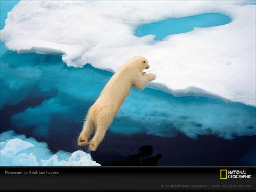 blue polar bear hopkins 1052295 sw - Empieza bien el día. Fondos de pantalla de naturaleza
