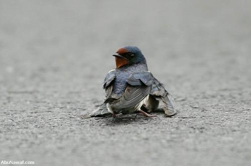 pajaro 1 - amor y compasión entre pájaros