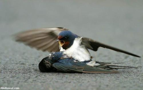 pajaro4 - amor y compasión entre pájaros