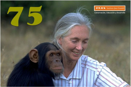 jane goodball - jane-goodball