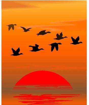 pajaros - Juntos y a volar