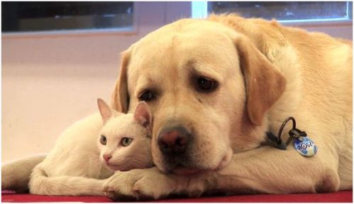 perro gato - perro-gato