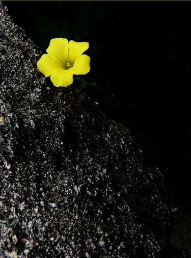 flor-esperanza