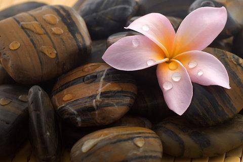 flor-piedra