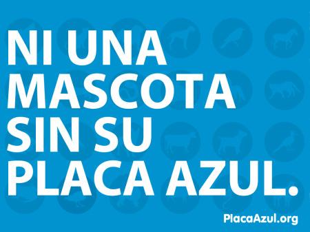placa azul - PLACA AZUL: iniciativa contra el abandono de animales