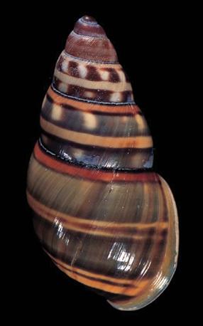 shells 1 - SHELLS: La colección más bella de conchas del mundo ya la podemos disfrutar todos