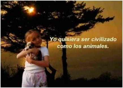 animales - animales