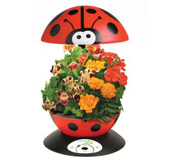aerogarden flores - 10 regalos alternativos