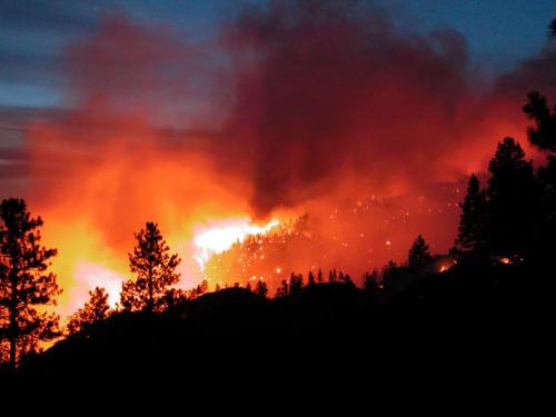 incendiosforestales - BOSQUES: Domingo Jiménez Beltrán (1/5) ¿Cuánto vale un bosque que se quema?