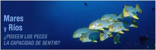 stop pesca - peces dolor
