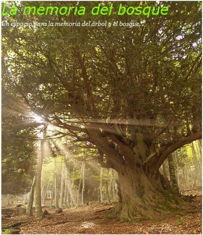 la memoria del bosque