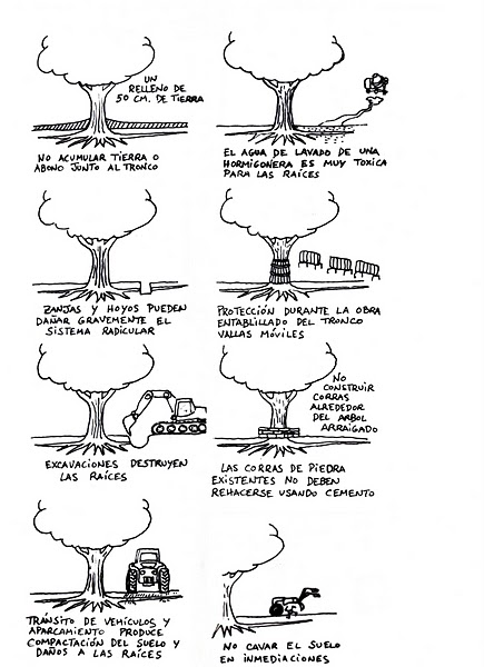 bosques2 - LA MEMORIA DEL BOSQUE: respeto y conservación de los bosques monumentales