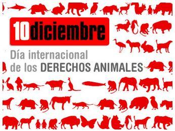 dia animales - dia-internacional derechos animales