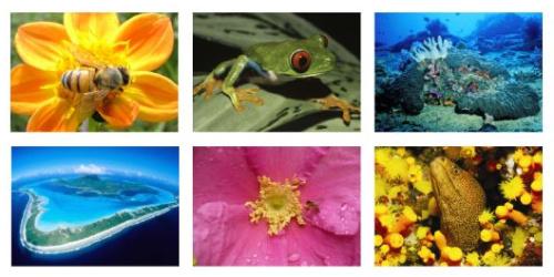 biodiversidad - biodiversidad