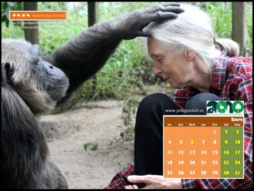 calendario instituto jane goodall enero 2010 - Calendario 2010 del Instituto Jane Goodall para tu ordenador
