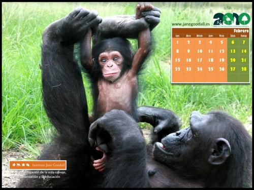 Calendario Instituto Jane Goodall Febrero 2010