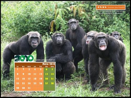 calendario ijge marzo 2010 10241pequeno1 - Calendario de marzo 2010 para el PC del Instituto Jane Goodall