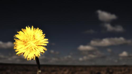 flor - Cuento sobre la flor de la honestidad