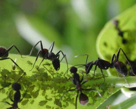 hormigas - hormigas