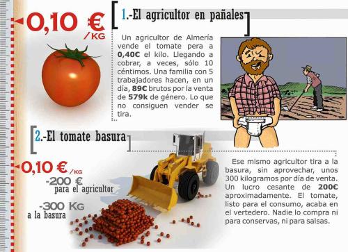 tomate 11 - tomate