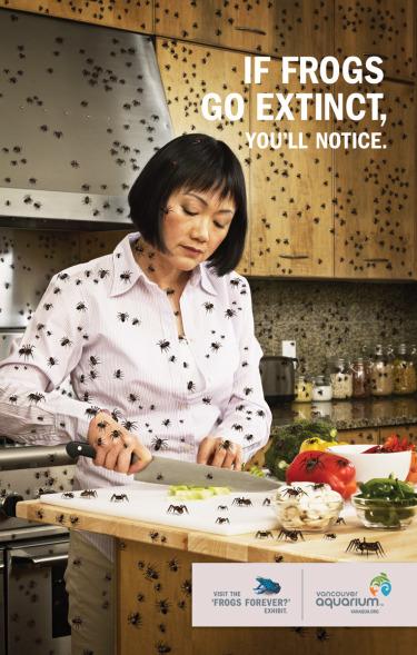 aranas - si las ranas desaparecen