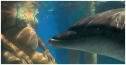 delfin - delfin parto