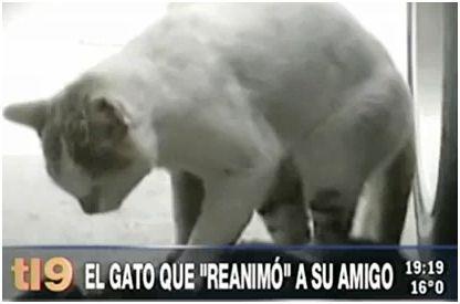 gato reanima amigo