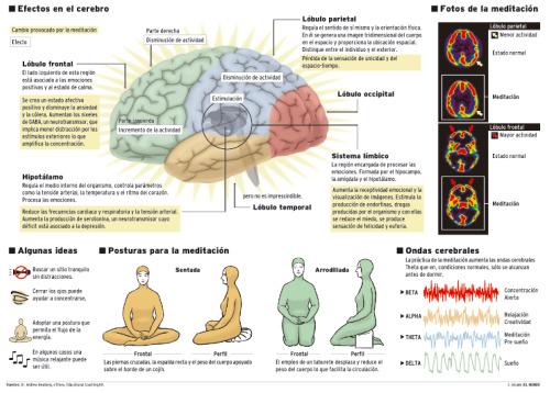 """meditacion serotonina - Los beneficios de la meditación en el siglo XXI: """"La meditación transforma el cerebro a largo plazo"""""""