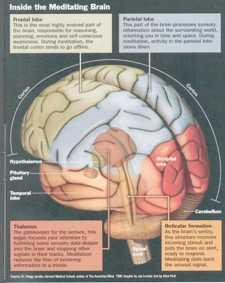 meditation and the brain1 - meditacion y cerebro