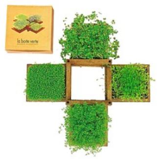 jardin comestible - Un pequeño jardín comestible