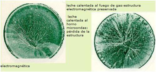 microondas3 - Los efectos del microondas en los alimentos y en la salud