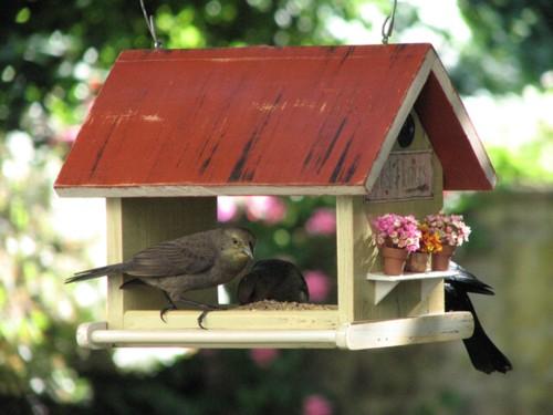 pajaros2 - Comedero para pájaros casero