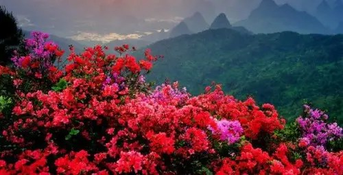 flores-china
